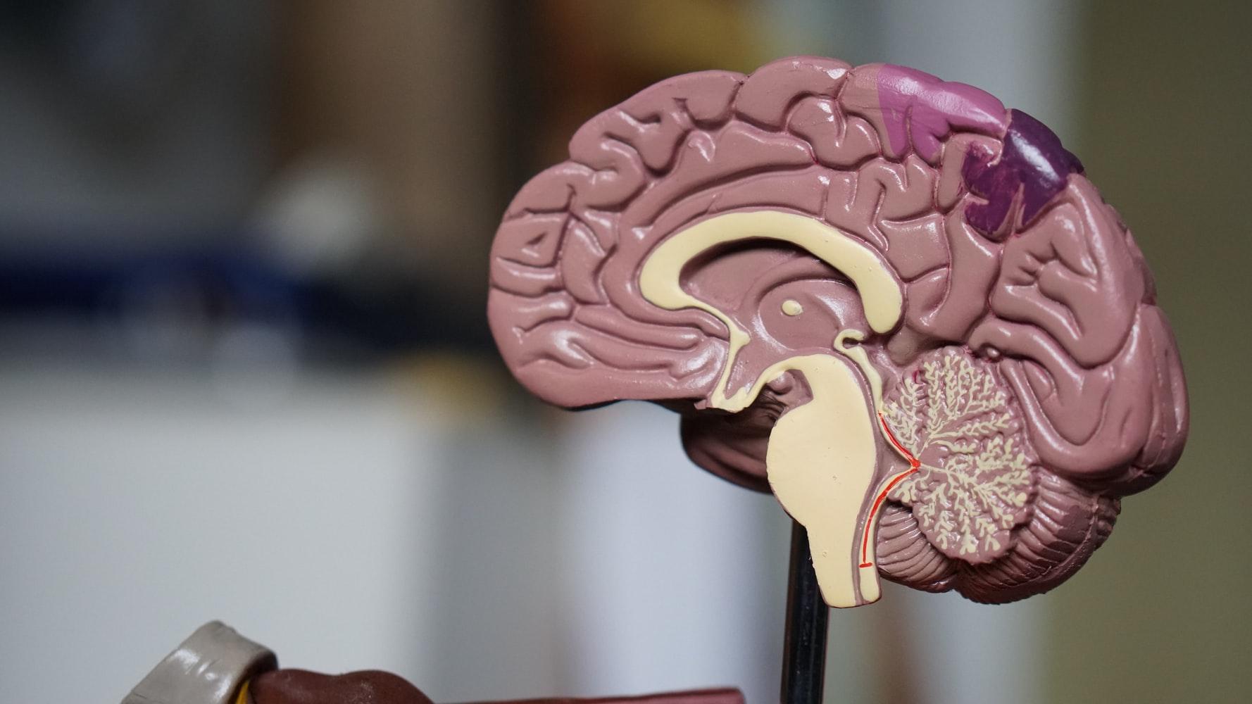 Comment faire de son cerveau un allié
